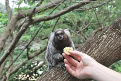 feeding, animals, monkey, animal, wildlife