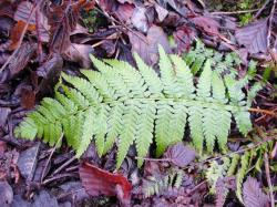fern, leaves, journal, plant, nature, green, flora