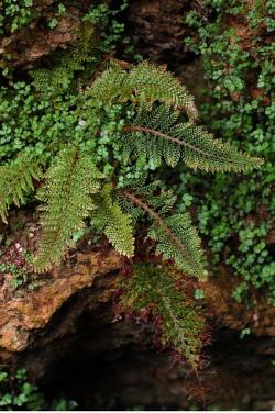 fern, plant, leaves, green, spring