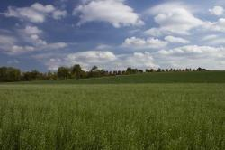 field, nature, tree line, agriculture, green, fields