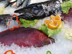 fish, ice, orange, business, market, restaurant, tooth