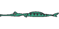 flat, side, art, alligator, predator, flattened