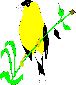 flower, bird, plant, wings, animal, goldfinch, stem