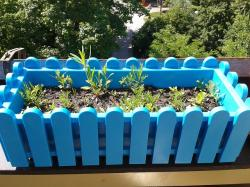 flower box, plant, blue, color, colorful, seed, sowing
