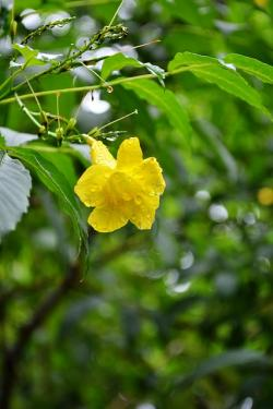 flower, yellow flower, flowers, nature, plant, plants