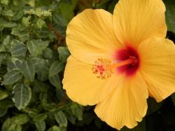 flower, yellow, summer, plant, summer plant, flowers