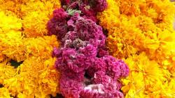 flowers, color, yellow, violet