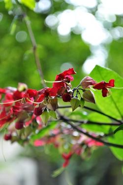 flowers, red flowers, blossom, blossoms, nature, plants