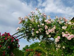 flowers, trellis, sky, clouds, plants, arrangement