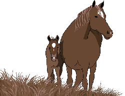 foal, mare, horse, animal