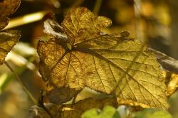 foliage, yellow, leaves, autumn, fall, nature, close up