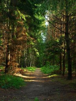 forest, trees, nature, green, landscape, plants