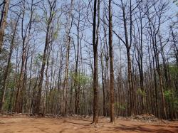 forests, dandeli, karnataka, india, wild, travel
