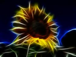 fractal, sun flower, helianthus annuus, flower, nature