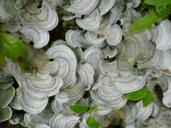 fungi, costa rica, cloud forest, plant, flora
