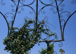 garden feature, metal, cage, ornate, large, rose, white