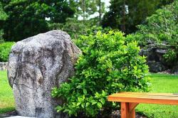 garden, japanese, rock, bench, florida, tree, rest