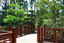 gardens, japanese, bridge, tree, flower, florida