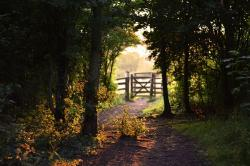 gate, path, summer, sunshine, shadow