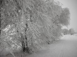 germany, landscape, winter, snow, ice, hoar frost