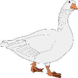 goose, bird, animal, looking, walking