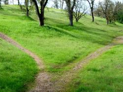 grass, path, hiking, trail