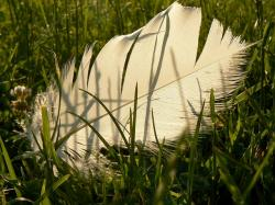 grass, white, feather, nature