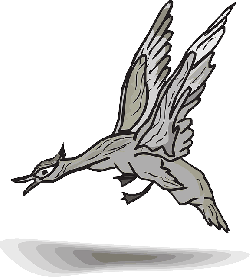 gray, bird, duck, wings, animal, landing, feathers