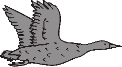 gray, bird, flying, wings, goose, feathers, fly