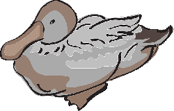 gray, brown, bird, duck, wings, art, feathers, and