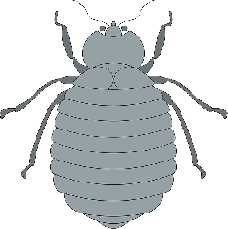 gray, top, view, segmented, insect, beetle, legs