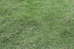 green grass, grass, green, plants, leaves, garden