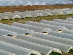 greenhouse, nursery, agriculture, cultivation