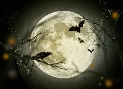 halloween, holidays, mystery, fairy tale, moon, crow