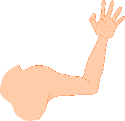 hand arm, man, strong, muscle
