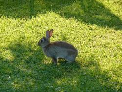 hare, animal, easter bunny, meadow, grass