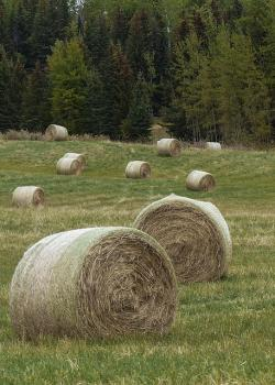 hay, balls, field, grass, landscape, countryside