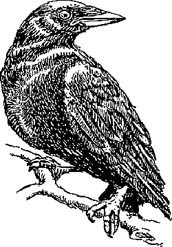 head, branch, crow, wings, with, feathers, turned