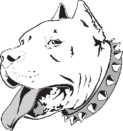 head, dog, bull, pet, household, animal, pit, canine