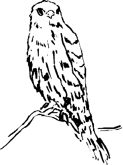 head, drawing, bird, branch, watching, animal, feathers