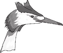 head, eye, bird, animal, beak, heron, feathers, eyes