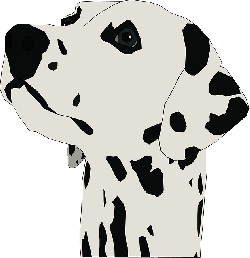 head, face, dog, spots, dalmatian, breed, spot, animals