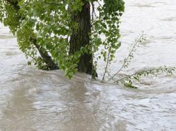 high water, flooding, tree, flood, water, water level