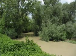 high water, river, tree, landscape, brown