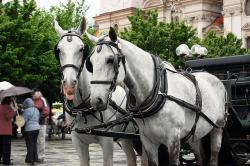 horse, animal, riding, carriage, prague, roadway