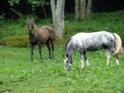horse, animal, woods, grass, farm, tree, country