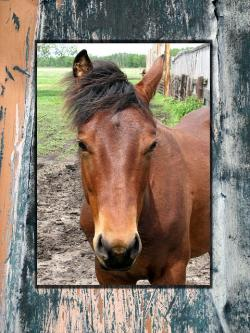 horse, card, western, country, rural, frame