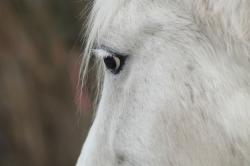 horse head, horse, mold, portrait, horse eye, friendly