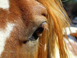 horse, horse head, animal, nature, countryside