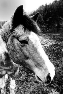 horse, macro, background, animal, agriculture